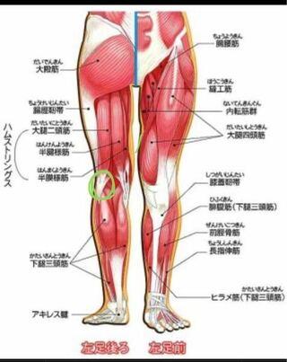 裏 痛み 膝