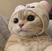 少し前Twitterでバズってたコリラックマの帽子を被った猫ちゃんのアカウント教えてください。 この猫ちゃんです。