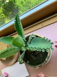 ※集合体恐怖症の方は苦手かもしれません これってなんの植物か分かる方いらっしゃいますか?