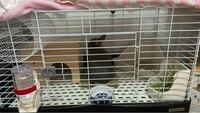 うさぎのケージのレイアウトについて 生後6ヶ月のネザーランドドワーフの雄を飼っています。 このケージのレイアウトで注意点やこうした方がいいなどの意見があれば教えてください。