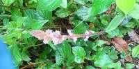 雑木林で見つけました。色んな野草に囲まれてぽつんと1本だけ生えてました。 名前を教えて下さい。宜しくお願いします。