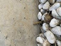 庭のコンクリ壁に地面からいくつか画像のようなふわふわ素材の巣?みたいのが伸びてきています。こちら何かお分かりになりますでしょうか?