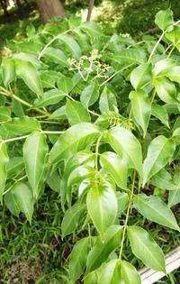 こちらの植物の名前をお教え下さい 宜しくお願いします