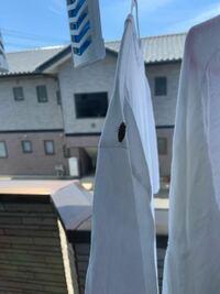 洗濯物についていたこの虫なんだかわかりますか? カメムシですか?