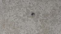 玄関先に何匹かいるのですが、害のある虫か分からず困っています。どなたかご存じでしょうか?