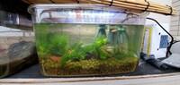 メダカが産卵しません。 南向きマンションベランダに設置。 水槽内に成魚メス6匹、成魚オス7匹、稚魚3匹の構成。 床砂は赤玉土。 飼育水は水道水に固形のカルキ抜きで作成。 カボンバ少々 と小さいヘアグラ...