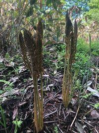 山菜採りにいったのですが、この植物は何でしょうか?