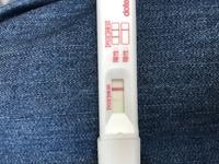 フライング 胚移植10日目 移植後のフライング検査はいつから使用可能?