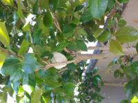 つばきの、木の間に10センチぐらいの、白い泡のかたまりがありました。何でしょうか?取った方がいいのでしょうか?