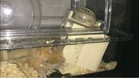 ハムスターが巣箱やトイレをひっくり返して困っています。 対処法を教えてくださると助かります!