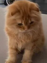 この猫ちゃんの種類教えてください!(><)
