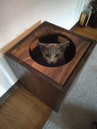 最近ゴミ箱に捨てたはずのレシートがテーブルの上にあったり、ゴミ箱の横にあったりして怖いです。  私が疲れているだけなのか? それとも霊的な現象なのでしょうか? ポルターガイスト? 写真はかくれんぼ中のうちのアイドル猫 ノンノンちゃんです。ノンノンちゃんの安全が心配です。