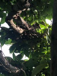 自宅の木にキジバトが巣を作り、産卵したようです。(おそらく1個) ただ、屋根の下から少し出ている場所に巣を作ってしまった為、雨の影響を受けないか心配しております。  木の葉はそこそこ茂っていますが、少なからず雨は当たります。 雨が降ってしまえば、もう無理でしょうか。  なんとか保護する方法はありませんか? アドバイスお願いします。