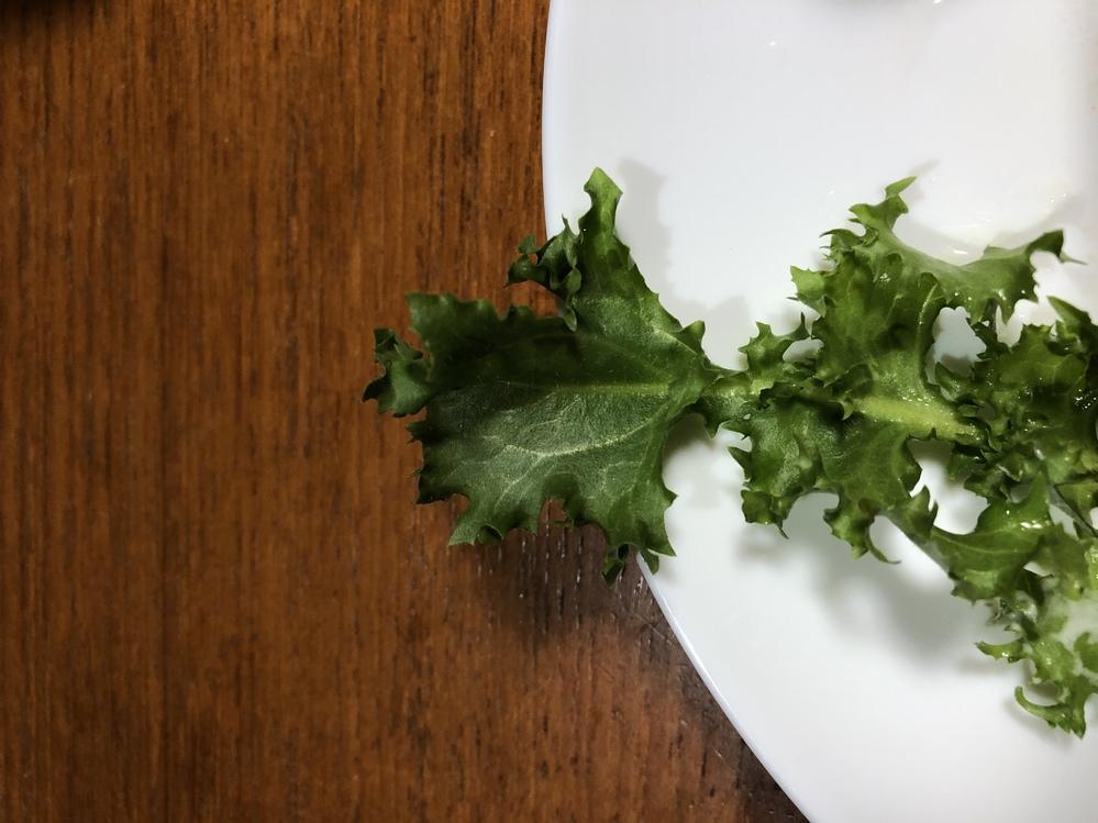 父が庭で取れた葉っぱを食卓に並ぶのですが凄く苦い葉っぱがいつもあります。これは本当に食用なのでしょうか…?