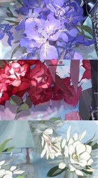 花に詳しい方にお聞きしたいのですが、画像の花(URLの動画内)、何の花か分かる方いませんか? この花をモチーフに何か描いたり作ったりしたいのですが花の名前がわからず詳しく調べることもできずで…  https://m.weibo.cn/6880285576/4479388085275749