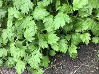 この植物は雑草ですか?何というものでしょうか?