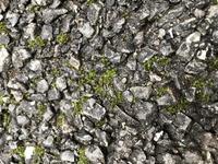 こういう苔はどうやってとればいいでしょうか? 家庭用高圧洗浄機ではとれませんでした。 苔除草剤でしょうかやはり。どれがきくのでしょうか?? 宜しくお願い致します。