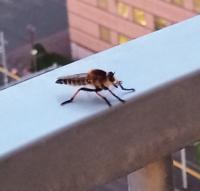昆虫についてお聞きします、画像の虫はハチでしょうか?アブでしょうか?それともまた違う虫でしょうか?柄はハチみたいな黒と黄色の虫でした、見たことがない虫だったので気になっております!詳しい方のご回答...