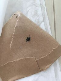 ゴキブリですか?ゴキブリじゃないですか?潰れちゃったので、よく見えませんが、教えて頂けますか。