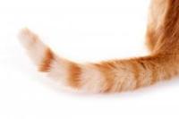 猫の長い尻尾。短い尻尾。 どっちも可愛いけど、皆さんの好みはどちらですか?  皆さんにとっての長い尻尾短い尻尾の魅力や、尻尾にまつわる愛猫とのエピソードなどはありますか?  わたしはぼんぼりのような短い尻...