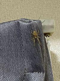 こいつは何て名前の蜘蛛ですか?また、害などはないですか?