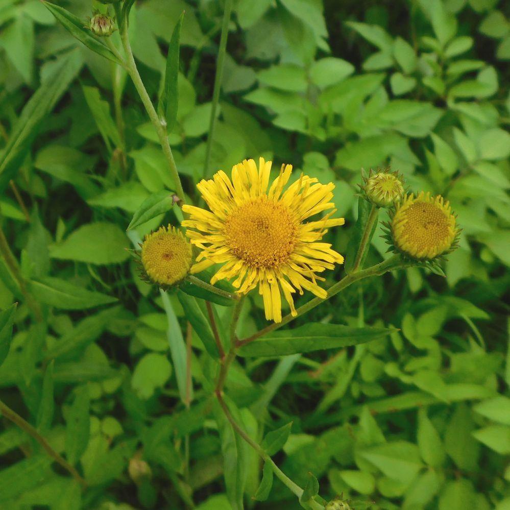 2020.7.24 愛知県犬山市善師野 この花の名前をお教えください。