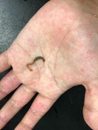 牡蠣の殻についていたのですが、これは何という生き物でしょうか