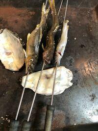 鮎の塩焼きを、家庭のコンロで作っております。オススメの調理法や、もっと美味しく焼ける方法が有れば教えて下さい! 気になるポイント!  ・素焼きが気になってます。  ・三匹焼いてますが、1匹の腹から胆汁(緑色の液体)らしきものが出てきました。  ・良質の井戸水で2日ほど、飼いましたが、もしや海に行って海水くんで、海水で1時間でも鮎を飼ってから料理すれば最も美味しかったかもと少し後悔気味です! ...