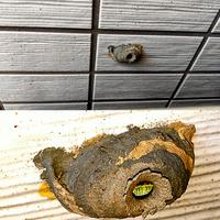 虫の巣の様です。。  ベランダに置いた室外機と壁の間に3×4cmほどの見慣れないものが… 穴を見ていると中で何か蠢いています。 フラッシュを使って撮影すると鮮やかな緑色です。  これは何 の巢でしょう? 放置していても大丈夫でしょうか? 取り除く場合の方法は?  洗濯干したり良く使う場所なので怖いです。 教えて頂けると助かりますm(_ _)m