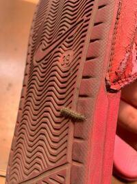 ベランダにこのような毛虫がいるんですけど、なんの毛虫かわかりますか?