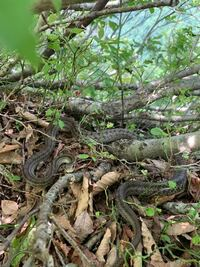 これはなんというヘビですか