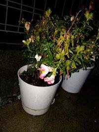 この花はなんて名前ですか? 花屋で100円で買った花です。