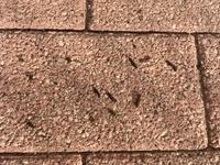 1ヶ月前から自宅の外壁や軒下のブロックに糞があります。イモリかコウモリかと思うのですが、教えて下さい