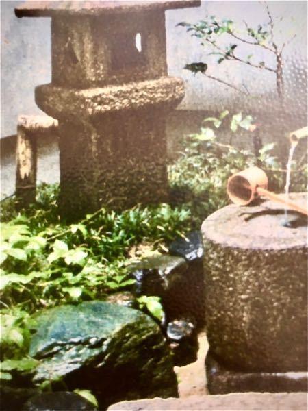 茶道、露地の草木についての質問です。 この写真の草木の名前を分かる範囲で結構ですので、お教え頂きたく、ご質問させていただきました。よろしくお願い申し上げます。