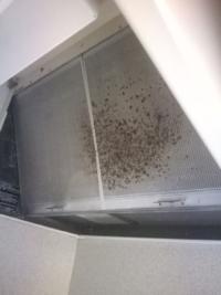 台所 換気扇の写真です。 賃貸アパートに住んで1年半になります。  初めからこうなっていたか覚えていないのですが、この黒いシミは、なんでしょうか?  広範囲でボツボツ黒くなっていて、気持ち悪いのでキレイに...