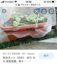 ミニ大根のプランター栽培の防虫ネットについて。 この秋、プランターでミニ大根に挑戦してみようかと考えております。  プランター栽培はローズマリーを育てておりますが野菜は初めてです。  そこで質問です。 種まきと同時に防虫ネットをかけます。 皆様は防虫ネットをどのように留めていますか?  添付写真のようなゴムバンド?ゴムフック?のようなものが便利そうだなと思いました。 たくさんの洗濯バサミで留...