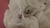 カナヘビの卵が孵化しません。 しぼんで、水滴がついて少し割れています‼大丈夫ですか?朝から夜までこの状態です‼