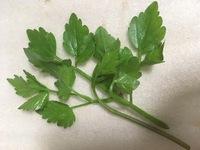 これはセリ科の植物でしょうか?水辺に生えていました。  ちなみに、キアゲハの幼虫の食草になるでしょうか…?(こちらは回答いただかなくても大丈夫です)