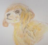 絵の評価感想などよろしくお願いします! 色鉛筆画です。