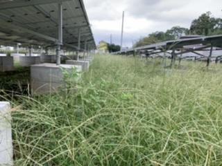 繁殖している雑草の名前と駆除方法を教えてください。