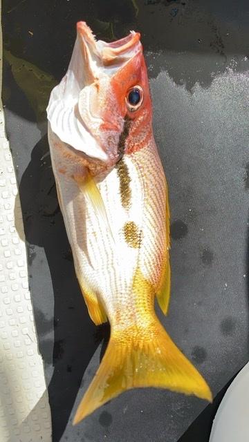 分かる人いますか?今までかなり長年釣りをしていますが初めて見ました! 食べれますか?