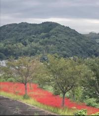 和歌山県の南の方、おそらく田辺市付近だと思うのですが、場所分かりますか?