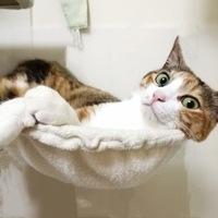 あなたは 普通の猫替え歌と 絵土な猫替え歌だったら どっちが好きですかニャ? (ΦωΦ)