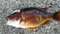 これは何と言う魚でしょうか?