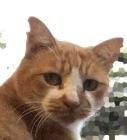 カット 野良猫 耳 地域猫と野良猫の見分け方は?耳カットで性別が分かるの?