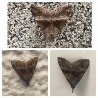 蛾の種類  写真の蛾について 種類が分かる方、ご教示ください。  三枚の添付写真がありますが、それぞれ別個体です。 同種かと思うのでまとめて質問しました。  【上】本日福岡県で撮影したものです。 【左下】本...