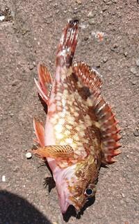 この魚わかりますか?