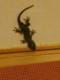 家の中にいました。これは何という動物ですか。