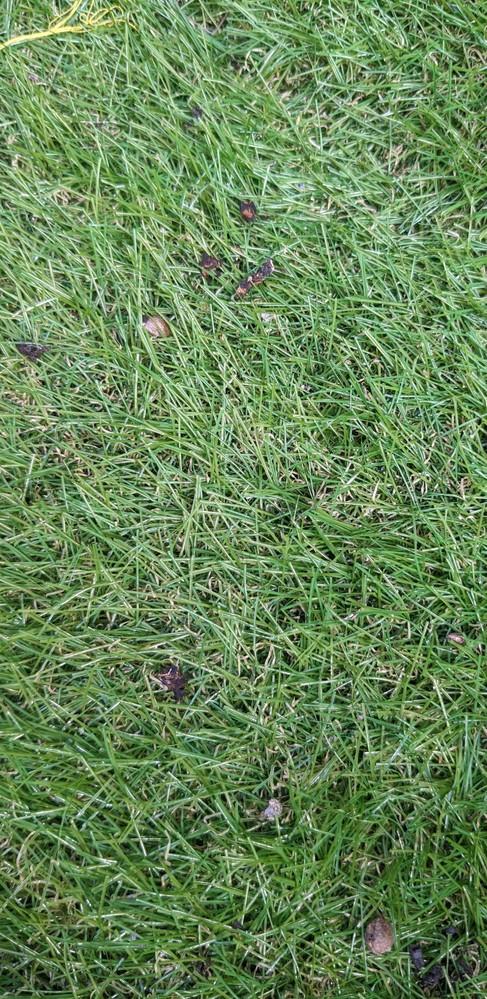 コウモリ?の糞の駆除の方法などについて教えてください。 築30年ほどの一軒家に3ヶ月ほど前から賃貸で住んでいます。 2ヶ月ほど前に人工芝をひいて、夏の間はなかったのですが最近何かの糞と家にないはずの木の実が目立つようになりました。 いろいろ調べたのですがコウモリの糞に見えるのですが間違いないでしょうか、、、? また、外壁に巣のようなものは確認できなかったのですが、コウモリは屋根裏とかに住み着くのでしょうか。 最近、家にねずみがいることが分かり今月駆除を業者さんにお願いするのですが コウモリの場合一緒に駆除されるでしょうか? 人工芝の掃除はどうすれば簡単にできますでしょうか(; ;) 質問がたくさんありますがよろしくお願いします。