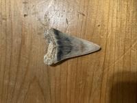 最近浜辺で魚の歯?らしきものを拾ったのですがその種類がわかりません。 どなたか魚の歯に詳しい方、どの魚の歯か教えてください!よろしくお願いします致します